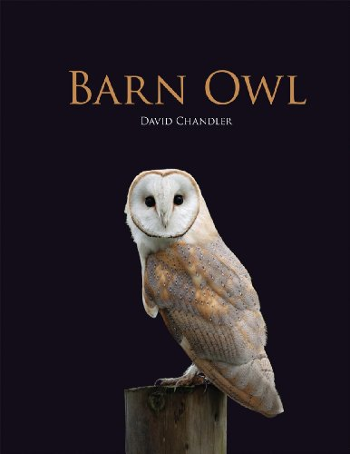 About Barn Owls