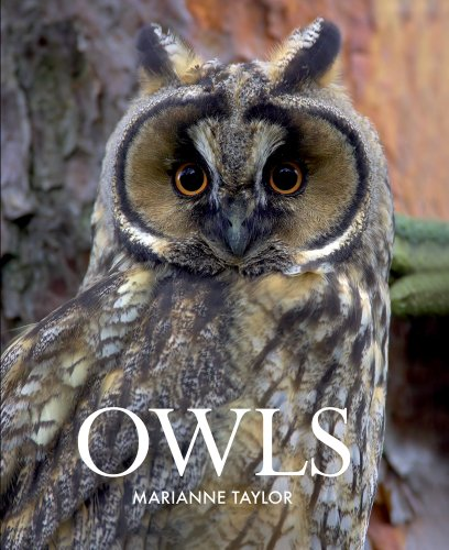 Nice Book about Owls