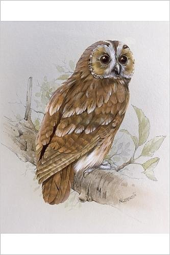 10 gorgeous owl paintings for sale