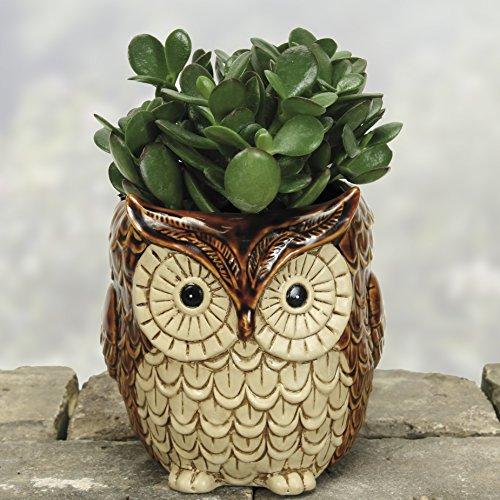 Ceramic Owl Planters